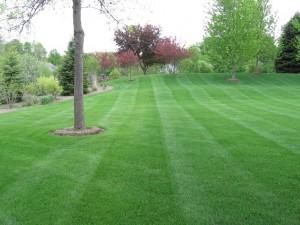 lawn mowed by Green Meadows