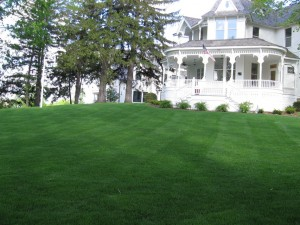 lawn care by Green Meadows